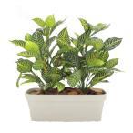 ダニアプランターA (フェイク 造花 インテリア 観葉植物 高さ60cm 幅50cm)