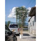 大型サイズ 人工観葉植物 トネリコ 高さ400cm5本株立(インテリア 造花 樹木 造木 フェイクグリーン 室内向け)