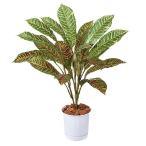 耐水耐UVクロトンブッシュ (造花 人工観葉植物)