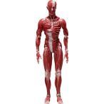 figma 人体模型[フリーイング]《04月予約》