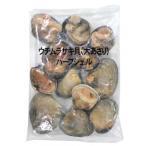 【7/1追加】華成 ウチムラサキ貝(大あさり)11/15 1kg