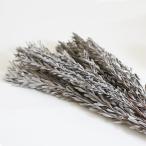 プベッセンス シルバーホワイト(90g入) プリザーブドフラワー・花材 <プリザーブドフラワー・フラワーアレンジメント・花材・花資材>