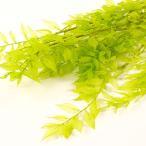 ラスカス ライムグリーン <プリザーブドフラワー・フラワーアレンジメント・花材・花資材・ナチュラル>