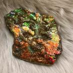 アンモライト かけら 欠片 標本にどうぞ パワーストーン お守り 天然石 化石 L1505
