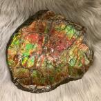アンモライト かけら 欠片 標本にどうぞ パワーストーン お守り 天然石 化石 L1705