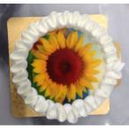 写真ケーキ 4号(12cm)  生クリーム/チョコクリーム 丸型