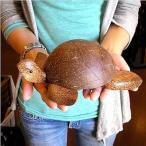 灰皿 ココナッツ 椰子 亀 Lサイズ 全長 20cm アジアン バリ タイ エスニック 雑貨 インテリア 置物 オブジェ カメ 椰子の実 トロピカル