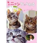 ニャンちゃんねる 3ツ子のアメリカンショートヘアー 中古 DVD