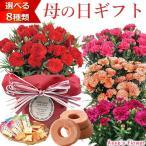 母の日 2018 花 選べるカーネーション鉢植え&選べるお菓子セット  ギフト 送料無料