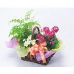 花 鉢花 と 観葉植物 のバスケット お祝い バースデー プレゼント 歓送迎 送別 退職 贈り物 卒業