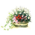花 鉢植え マーガレットと春の花 寄せ鉢 お祝い バースデー プレゼント