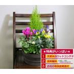 花 鉢植え ミニガーデン コニファとミニシクラメン 寄せ植え お祝い バースデー プレゼント