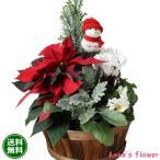 お歳暮 クリスマス バースデーギフト 寄せ植えポインセチア ゴールドクレスト入り  誕生日の花 翌日配達