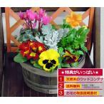 バースデーギフト ミニガーデン季節のお花の寄せ植え ギフト プレゼント 贈り物