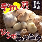 エレファントガーリック 青森県産 乾燥 土付き 白にんにく 訳あり
