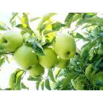 否バラ詰め【A級品・王林・20kg(キロ)用 木箱 詰】青森県産・青りんご