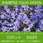 芝桜(シバザクラ)10ポット オーキントンブルーアイ