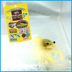 黄金ザリガニ 約5〜6cm前後+ざりがにの餌セット 【生体】