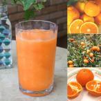 【冷凍便】和歌山産「オレンジMIXスムージー」農家さんから直接分けてもらう柑橘類(みかん・清見・バレンシア等 + レモン)+みかんの花の蜂蜜