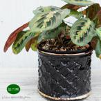 アヒージョ鍋 キャセロール鍋 土鍋 1人用カップタイプ 口径8.5cm(持手付き)チーズフォンデュ ココア スープに カスエラ 耐熱陶器 直火 オーブン可