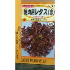 赤 焼肉用 レタス チマサンチ 種 送料無料