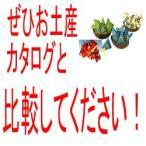 ハワイ お土産 マウナロア 小袋サイズ オールセット4種