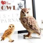 貯金箱 コインバンク おしゃれ おもしろ アニマル アニマルコインバンク PET BANK BARN OWL フクロウ/ミミズク