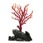 日本産血赤珊瑚 拝見