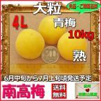 生南高梅秀品4L-10kg単位、梅干・梅酒・他、有機肥料使用/和歌山県産青梅(緑から黄色になる)