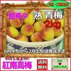 紅南高梅2kg梅干・梅酒・他、有機肥料使用/紀州和歌山県産青梅