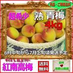 紅南高梅4kg梅干・梅酒・他、有機肥料使用/紀州和歌山県産青梅