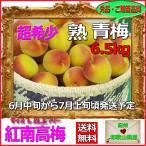 紅南高梅6kg梅干・梅酒・他、有機肥料使用/紀州和歌山県産青梅