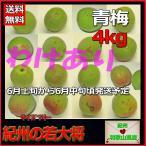 ショッピング訳有 訳有(わけあり)青梅・梅酒用4kg和歌山県産
