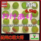 ショッピング訳有 訳有(わけあり)青梅・梅酒用6.5kg和歌山県産