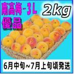 南高梅優品3L-2kg梅干・梅酒・他、有機肥料使用/紀州和歌山県産青梅