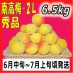 生梅南高梅秀品2L-6.5kg梅干・梅酒・他、有機肥料使用/紀州和歌山県産青梅