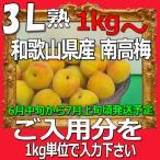 南高梅秀品3L-1kg梅干・梅酒・他、有機肥料使用/紀州和歌山県産青梅