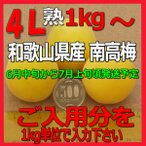 生梅南高梅秀品4L-ほしいだけ 1kgから、梅干・梅酒・他、有機肥料使用/紀州和歌山県産青梅