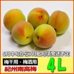 生梅南高梅秀品4L-4kg梅干・梅酒・他、有機肥料使用/紀州和歌山県産青梅