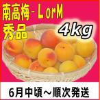 南高梅秀品L-4kg梅干・梅酒・他、有機肥料使用/紀州和歌山県産青梅