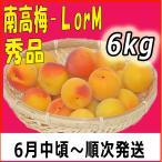 生梅南高梅秀品L-6.5kg梅干・梅酒・他、有機肥料使用/紀州和歌山県産青梅