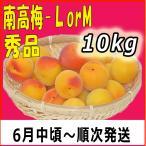 生梅南高梅秀品L-10kg梅干・梅酒・他、有機肥料使用/紀州和歌山県産青梅