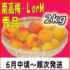 南高梅秀品L-2kg梅干・梅酒・他、有機肥料使用/紀州和歌山県産青梅