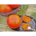 【令和2年発送】富有柿(一般品質・優品)約6Kg 22~28個入11月下旬頃発送