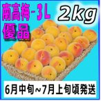 生梅南高梅優品3L-2kg梅干用・梅酒用・有機肥料使用/紀州和歌山県産青梅