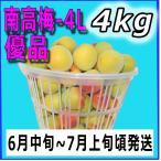 生梅南高梅優品4L-4kg梅干・梅酒・他、有機肥料使用/紀州和歌山県産青梅