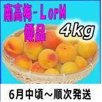 南高梅優品L-4kg梅干・梅酒・他、有機肥料使用/紀州和歌山県産青梅