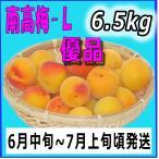 生梅南高梅優品L-6.5kg梅干・梅酒・他、有機肥料使用/紀州和歌山県産青梅