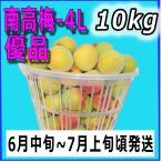 生梅南高梅優品4L-10kg梅干・梅酒・他、有機肥料使用/紀州和歌山県産青梅