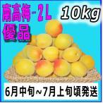 生梅南高梅優品2L-10kg梅干・梅酒・他、有機肥料使用/紀州和歌山県産青梅